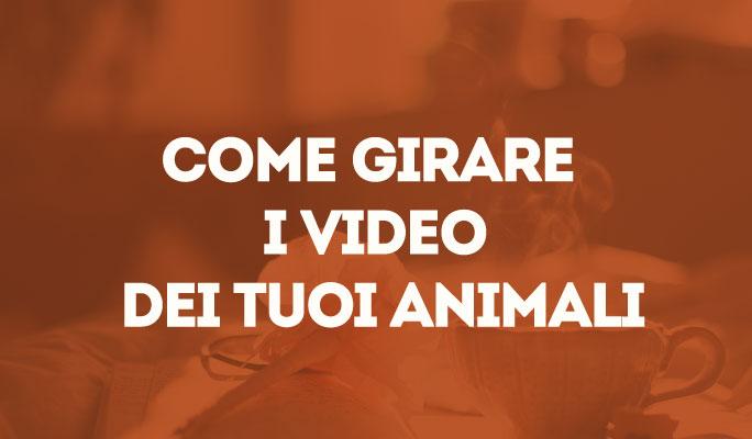Come girare i video dei tuoi animali