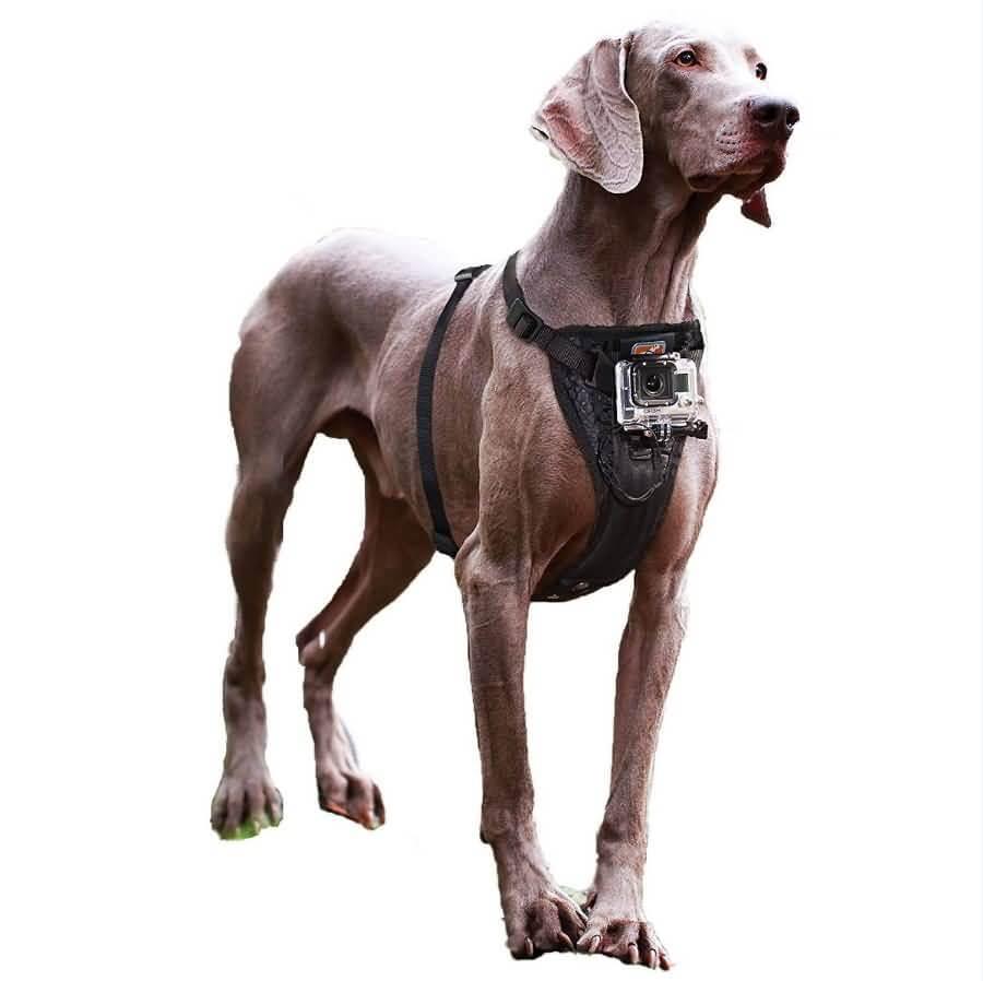 Cinghia di cane di Kurgo con il supporto della fotocamera